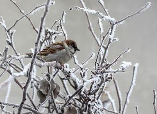 sparrow-3123070_640.jpg